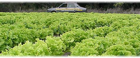Snap principios de producci n vegetal en cultivos for Horticultura definicion